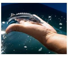 Аквакультура - инновационные подходы  к увеличению рыбопродуктивности