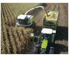 Технология выращивания и консервирования кукурузы на силос  с использованием углеаммонийных солей