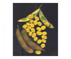 Семена сои сорта УСХИ 6