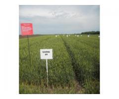 Серосодержащие минеральные удобрения и регуляторы роста   для озимой пшеницы