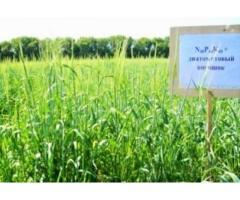 ДИАТОМИТ –  эффективное экологически безопасное удобрение