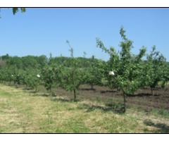 Инновационная агротехнология биолог. защиты плодовых садов  от вредителей