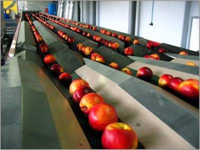 Технология производства концентрированных сухих плодов и овощей,