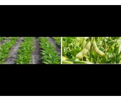 Разработка и внедрение в производство альтернативных технологий возделывания полевых культур,