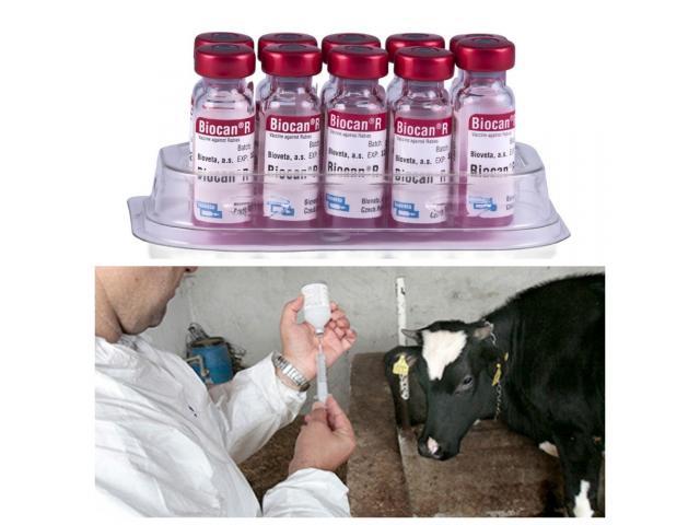Вакцина ассоциированная для крупного рогатого скота,