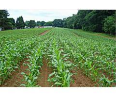 Инновационный способ подготовки почвы для возделывания бобовых культур,