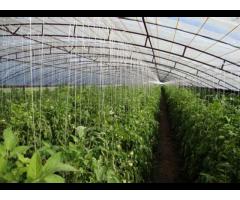 Технология производства экологически безопасной продукции,