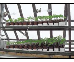 Повышение эффективности биотехнических систем культивационных сооружений,