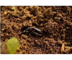 Биологическая защита овощных и декоративных культур защищённого грунта,