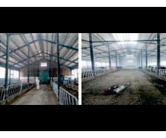 Способ профилактической дезинфекции животноводческих помещений в присутствии животных,