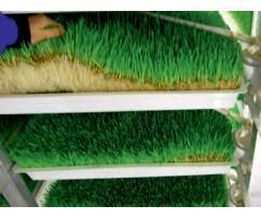 Технология производства биостимулирующих кормовых добавок,