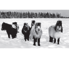 Технология профилактики и лечения стронгилятозов лошадей,