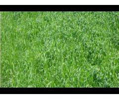 Агробиологическое оздоровление почв Кубани,