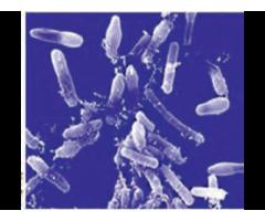 Фаговый биопрепарат для деконтаминации микрофлоры,