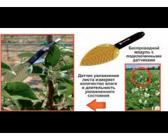 Интеллектуальная система прогнозирования и мониторинга патогенной ситуации на поле,