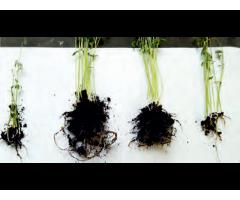 Многокомпонентные органоминеральные и органические удобрительные смеси,