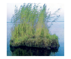 Повышение плодородия мелиорированных земель на основе использования сплавин,