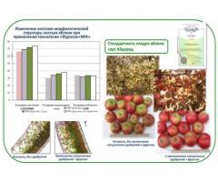 Способ повышения крупности и стандартности плодов