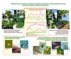 Способ биологической борьбы с сосущими вредителями  сельскохозяйственных культур