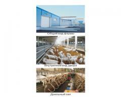 Современные фермы для молочных коз