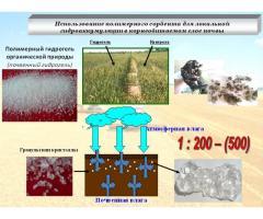 Использование полимерного сорбента для локальной гидроаккумуляции  в корнеобитаемом слое почвы
