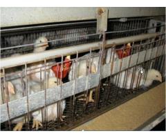 Эффективность использования различных кормовых средств  в животноводстве и птицеводстве,