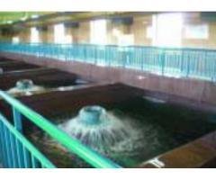 Электрическая защита рыб от попадания в оросительные водозаборы,