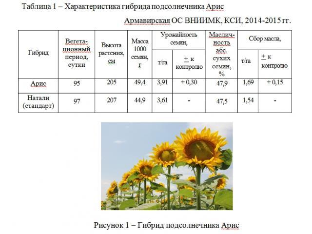 Гибрид подсолнечника АРИС, г. Армавир - Каталог инноваций АПК