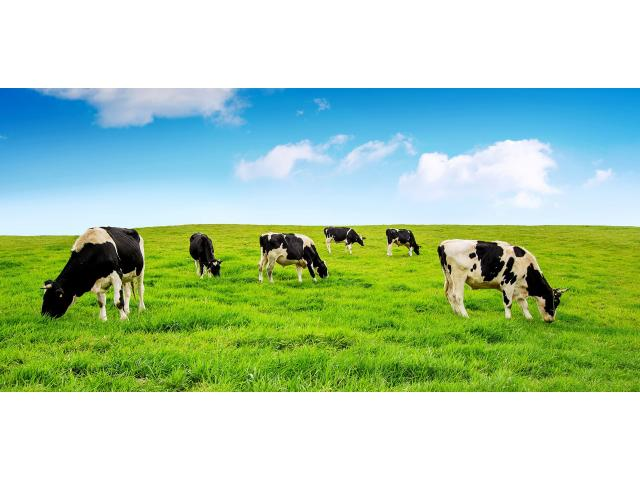 Инновационная технология искусственного осеменения коров и телок,