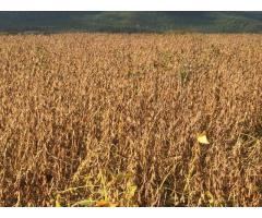 Приемы создания многокомпонентных посевов с зернобобовыми культурами в условиях лесостепи,