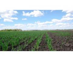 Насыщение полевых севооборотов зерновым сорго с асинхронным сроком созревания,